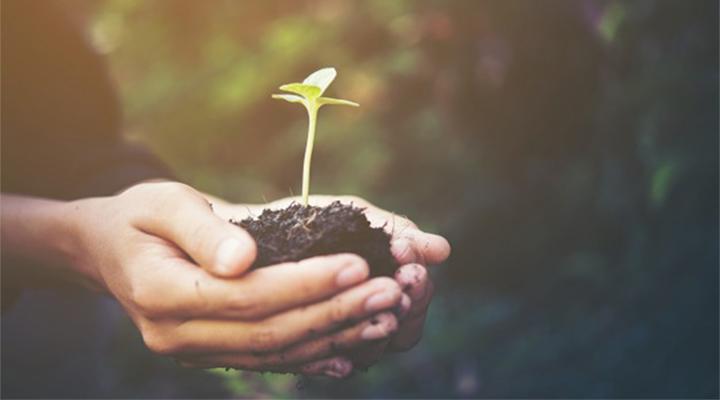 Мегапроект как инструмент создания комфортной экологической среды школы