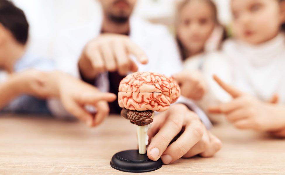 Медико-биологические основы специальной педагогики