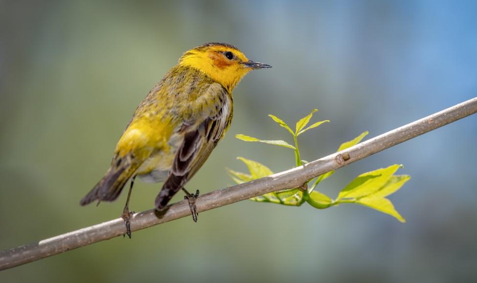 Орнитологические экскурсии в природе